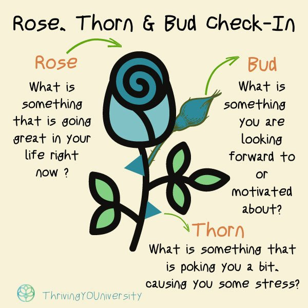 Rose, Thorns & Bud Check-In